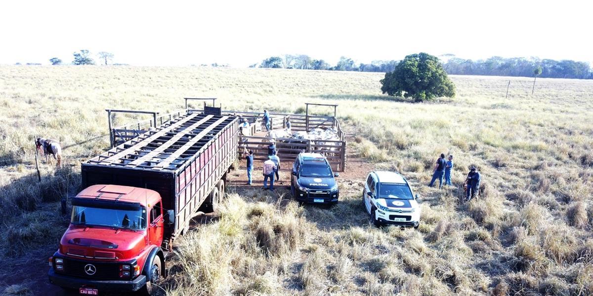 Cabeças de gado foram furtadas de propriedade em Palestina e encontradas em uma área rural de Aparecida D´Oeste (Divulgação/Polícia Civil)