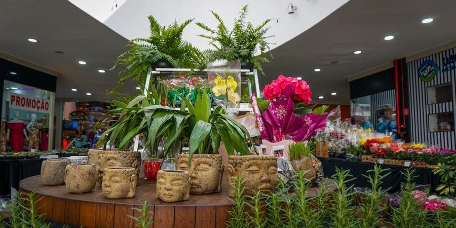 A feira traz flores de diferentes tipos e tamanhos (Divulgação)