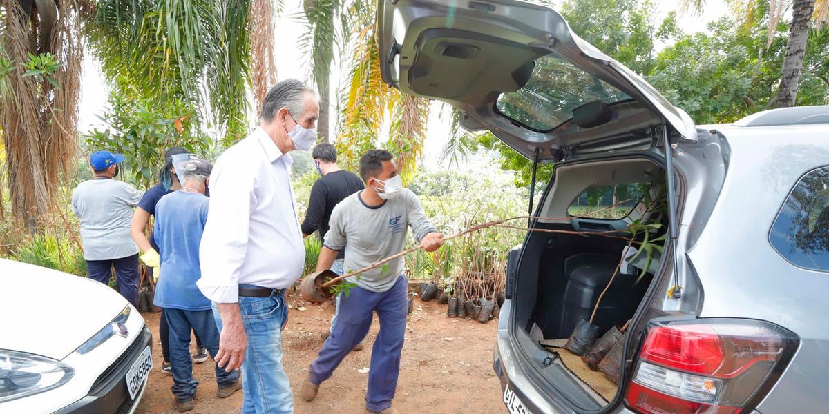 Drive Thru distribuirá mudas em Rio Preto (Divulgação/Prefeitura de Rio Preto)