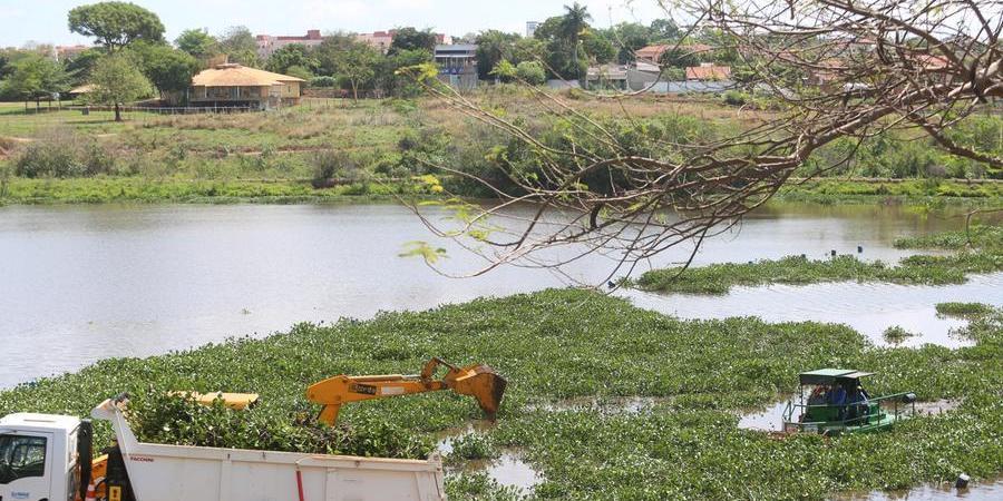 Máquinas trabalham na retirada dos aguapés no lago 3 da Represa Municipal (Guilherme Baffi 13/10/2021)